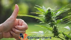 Interesting Marijuana Research Paper Topics